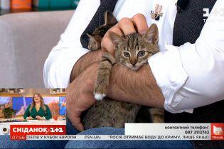 Пухнасті кошенята Боня та Бася шукають дім