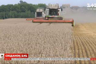 В Украине собрали 64% урожая зерновых - Экономические новости