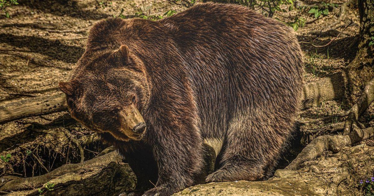 В Чернобыльскую зону вернулся исчезнувший вид диких животных, которых там не видели более 100 лет