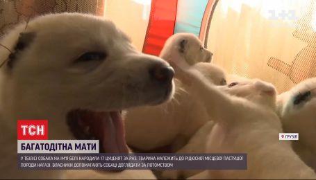 Чотирилапа мати-героїня: у Грузії собака привела на світ 17 цуценят
