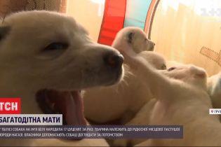 Четырехлапая мать-героиня: в Грузии собака произвела на свет 17 щенков