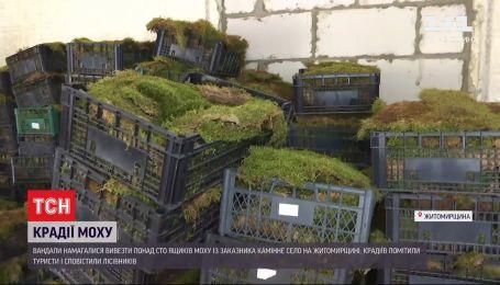 """В Житомирской области вандалы пытались вывезти более 100 ящиков мха из """"украинского Стоунхенджа"""""""