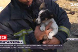 В Днепропетровской области провели спецоперацию по спасению щенка