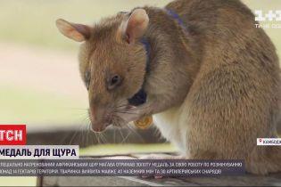 Медаль для щура: у Камбоджі нагородили тварину за порятунок людей