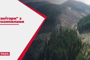 Злочинна вирубка Карпатських гір: чому сотні людей пішли в ліс проти важкої техніки і бензопилок
