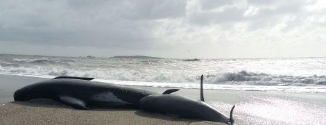 У Танзанії пів тисячі чорних дельфінів викинулися на берег: чому це стається