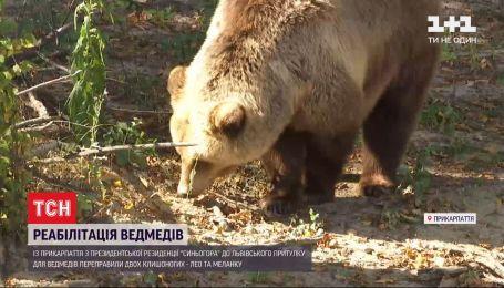 Ведмеже переселення: у притулку для клишоногих у Львівській області з`явилися нові мешканці