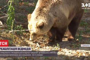Медвежье переселение: в приюте для косолапых во Львовской области появились новые жители