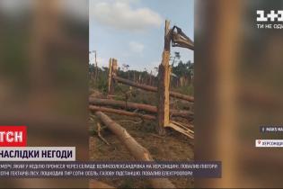 150 гектаров леса уничтожил смерч, пронесшийся в Херсонской области