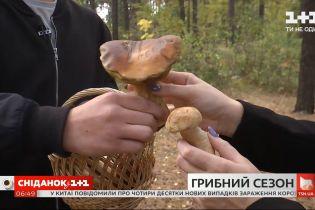 Грибной сезон: где собирать грибы и сколько они стоят на рынках