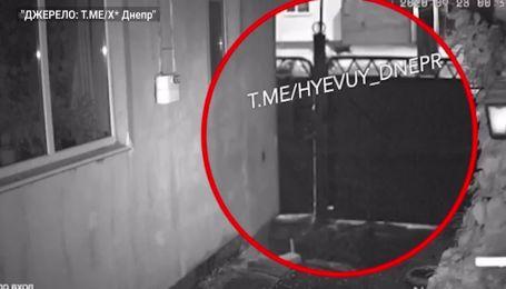 Атакували з усіх сторін: у Дніпрі зграя безпритульних собак напала на дівчину (відео)