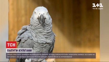 У британському зоопарку папуги покрили відвідувачів нецензурною лайкою і голосно реготали
