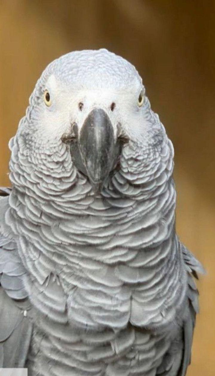 В британском зоопарке попугаи облили посетителей нецензурной бранью и громко хохотали