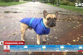 Чому важливо вигулювати собаку мінімум двічі на день і що робити, щоб ці прогулянки були безпечними