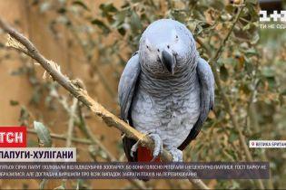 П'ятьох сірих папуг довелося ізолювати від відвідувачів зоопарку через нецензурну лайку