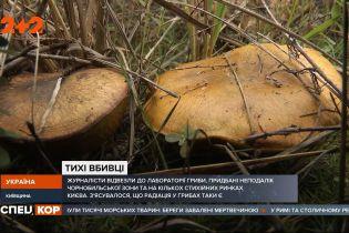 Вкусные и вполне безопасны: продавцы расхваливают свежесобранные в лесу грибы