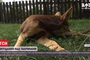 На Волыни мужчина спас собаку, которую хотел убить сосед