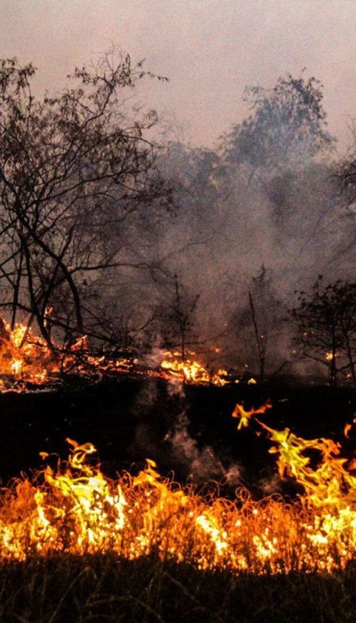 Через пожежі в Луганській області сотні родин лишилися без домівок