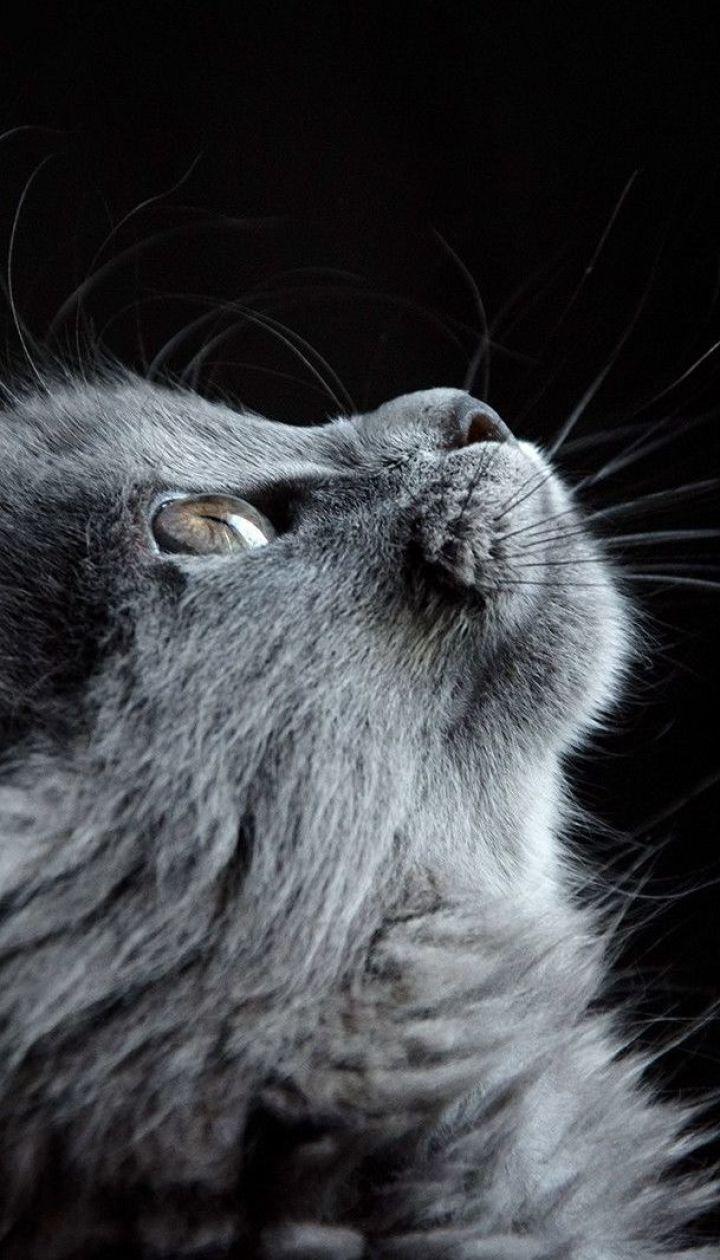 В Житомирской области охотник жестоко убил кота