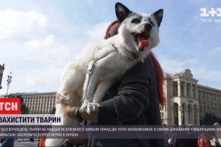 Во Всемирный день животных зоозащитники вышли на Майдан Независимости - чего требовали