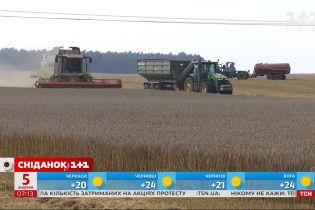 В Україні може подорожчати хліб – економічні новини