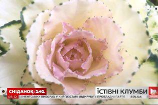 В Киеве начали высаживать декоративную капусту