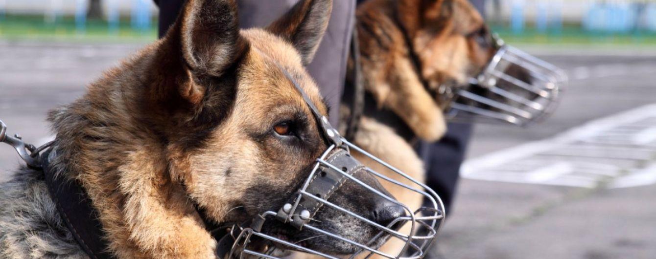 У МВС планують тренувати собак для виявлення заражених коронавірусом