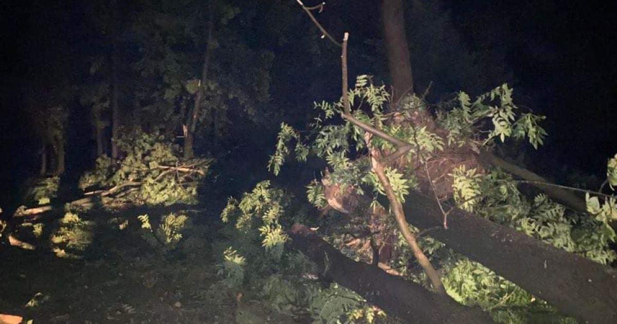 На Ивано-Франковск обрушился мощный ураган: непогода снесла крышу и повалила деревья в городе