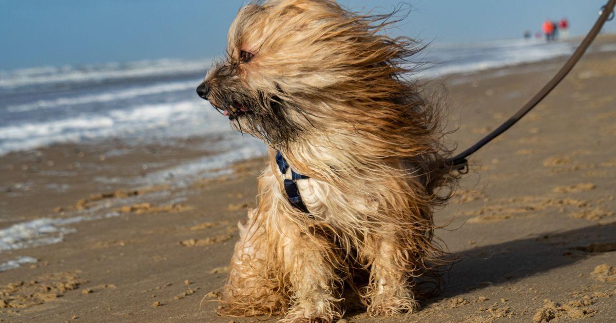 Киян попередили про ураганний вітер 6 жовтня: що треба робити