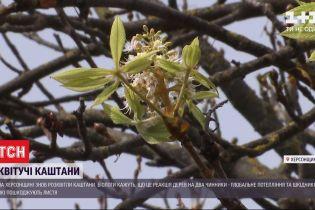 Через теплу осінь у Херсонській області знову цвітуть каштани