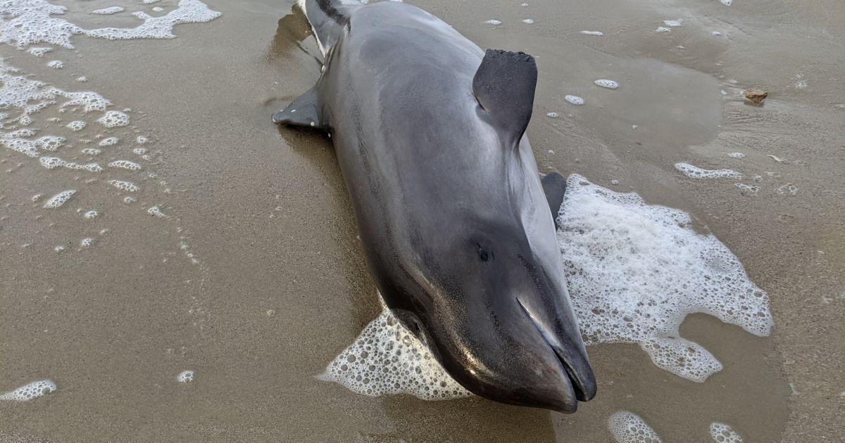 В Одессе на побережье нашли мертвого дельфина и рыбу: опубликовали фото