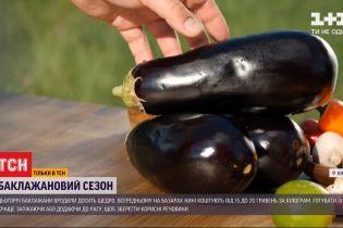 Баклажановий сезон: скільки коштують плоди і як їх правильно вибирати