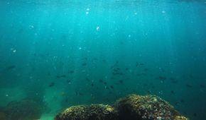 Науковці встановили найглибші місця в усіх океанах