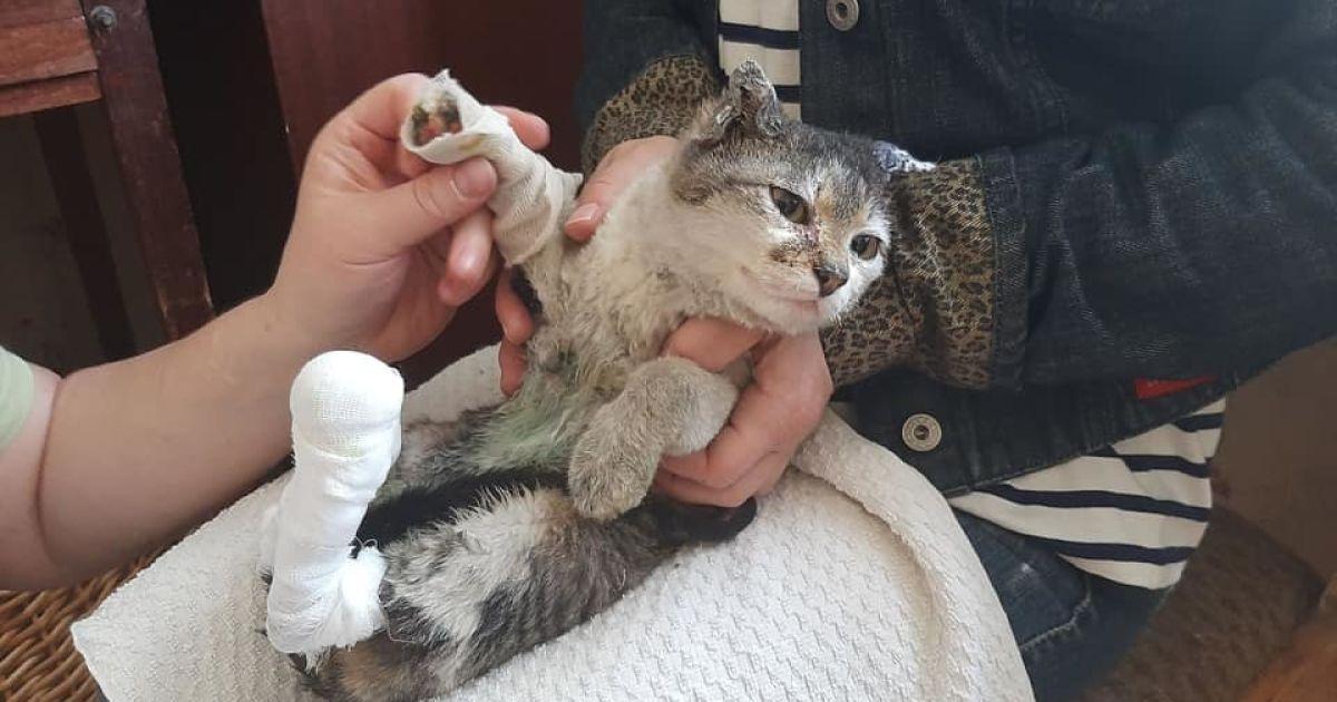 Обпечені й покинуті в полум'ї: волонтери показали тварин, постраждалих у пожежах на Луганщині
