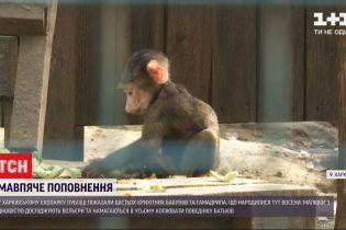 Осінній бебі-бум: у харківському екопарку народилися мавпенята