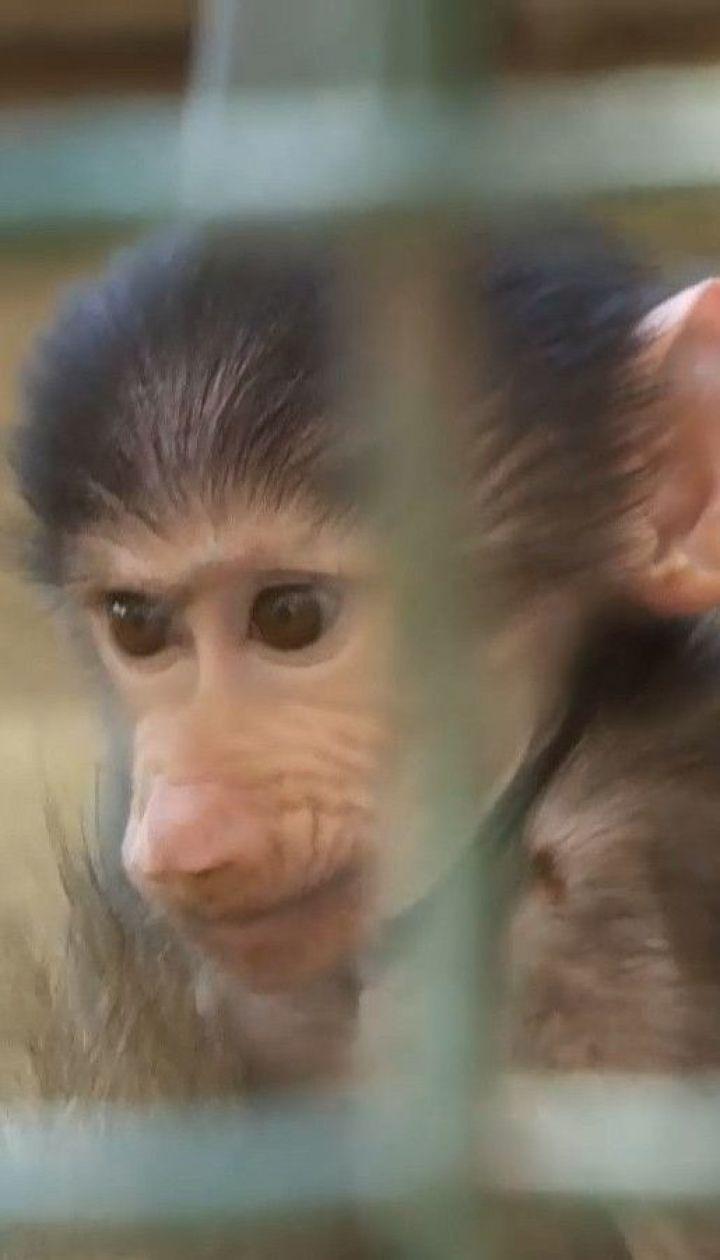Осенний бэби-бум: в харьковском экопарке - обезьянье пополнение