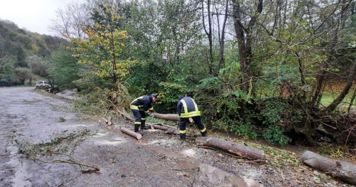 Деревья валились на дорогу, а вода заливала подвалы: на Закарпатье непогода наделала беды
