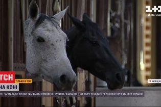 Життя VIP-скакунів: чому утримувати коня-спортсмена в рази дорожче за елітну машину