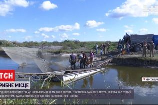 У ставках херсонського рибзаводу виростили понад 6 мільйонів рибин