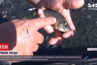Сезон зариблення: у Херсонській області випускають мальків у Дніпро