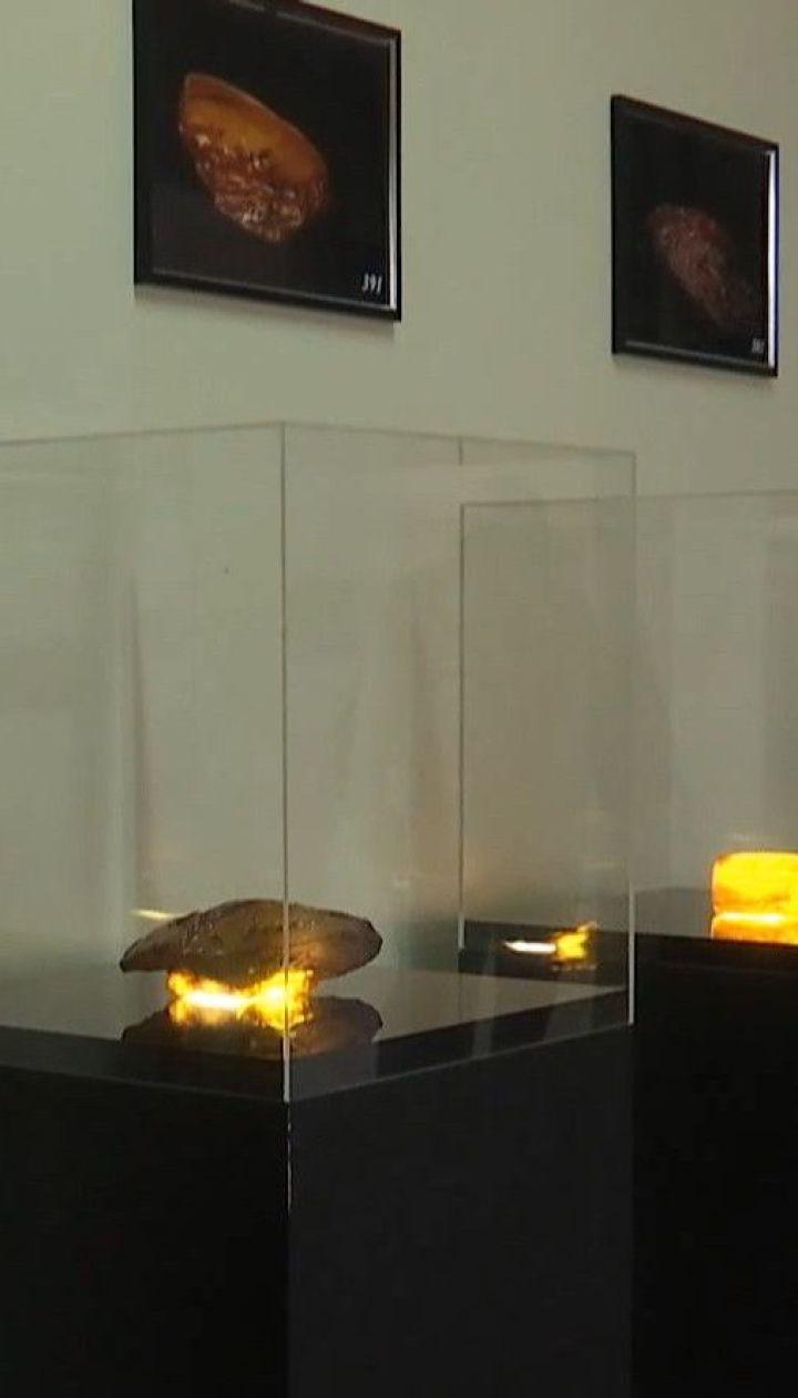 Бурштин з молотка: в Україні вперше відбувся відкритий аукціон із продажу природного каменю