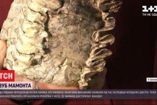 У Вінниці віднайшли зуб мамонта, якому понад 200 тисяч років