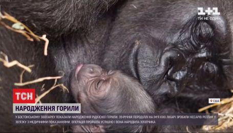 Працівники Бостонського зоопарку зафільмували народження рідкісної горили