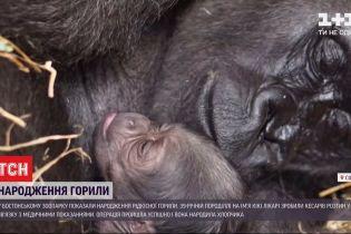 Работники Бостонского зоопарка сняли рождение редкой гориллы