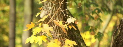 До України на дві дні повернеться бабине літо: 22 та 23 жовтня погода потішить українців теплом