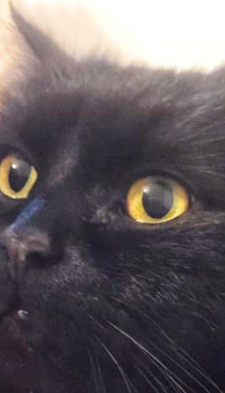 Втеча Маргарити: зі столичного музею Булгакова зникла кішка