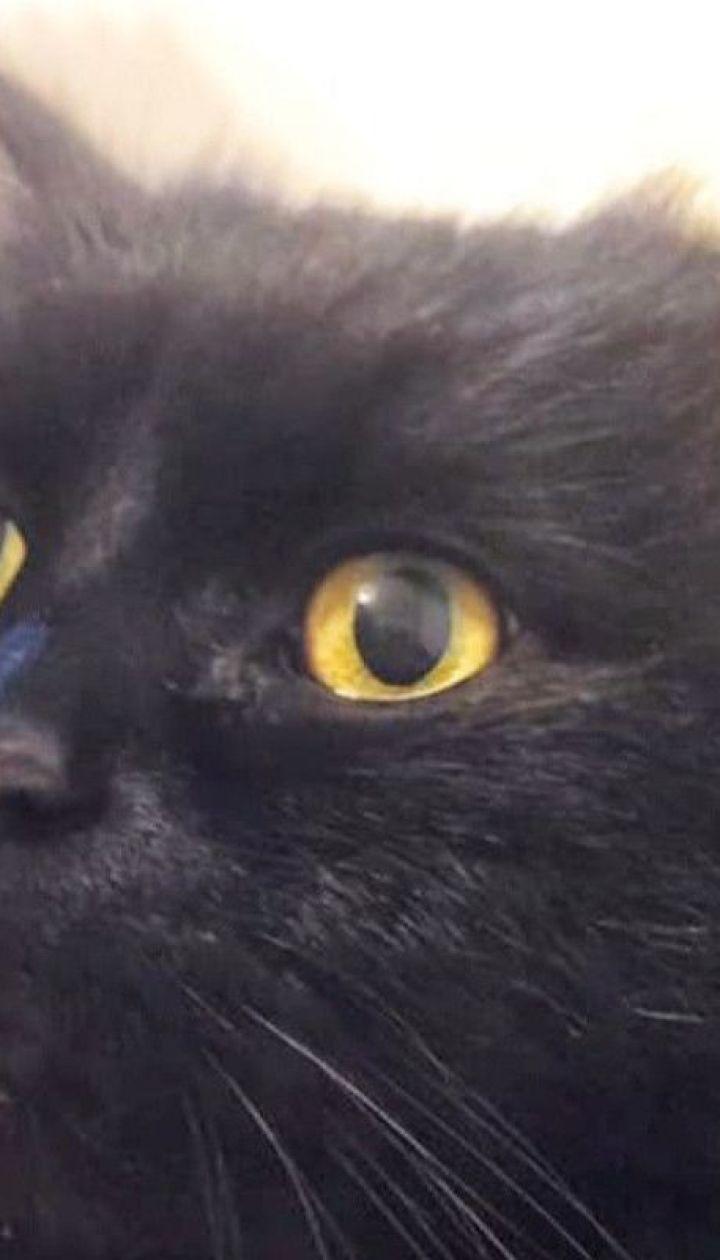 Побег Маргариты: из столичного музея Булгакова исчезла кошка