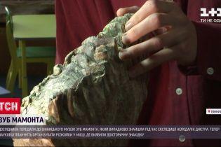 До Вінницького музею передали зуб мамонта, якому понад 200 тисяч років