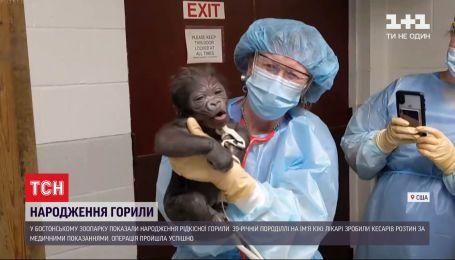 39-летняя горилла Бостонского зоопарка родила детеныша