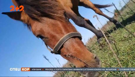 Почти полностью пропавшую породу диких лошадей задумали восстановить на Полесье